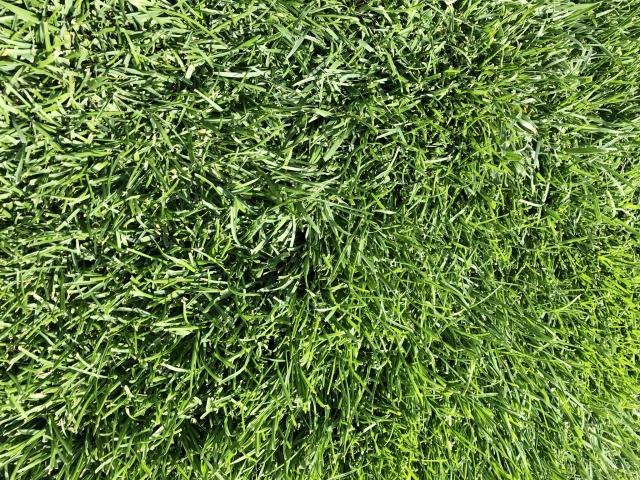 人工芝のDIYは意外と簡単!雑草対策に人工芝はオススメ!【レビュー】